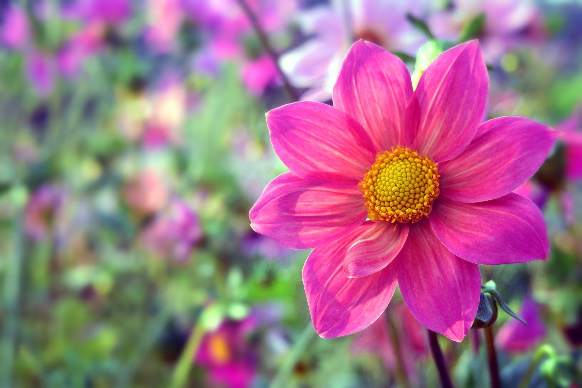 12 Ways To Plug The Summer Flowering Gap Perfect Plants