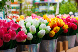 tulips, bulbs, spring flowering bulbs, planting bulbs, container planting, pots and containers, flower garden, gardening,