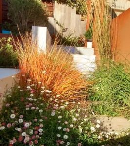 garden with ornamental grasses and Corten retaining wall flanked by Erigeron karvinskianus.