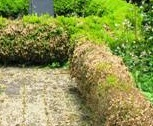 parterre, box hedging, box blight, box disease, plant health, formal garden, small leafed shrub, buxus,