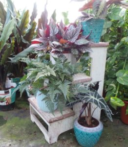 collection of house plants which filter toxins from the air and clean the environment