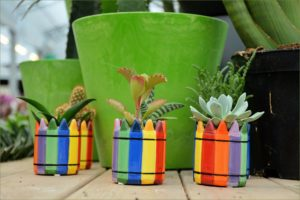 house plant collection of succulents in brightly coloured stripey pots