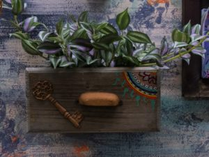 A Tradescantia house plant set into a drawer container with a wall that has been decorated using stylish paint effects.