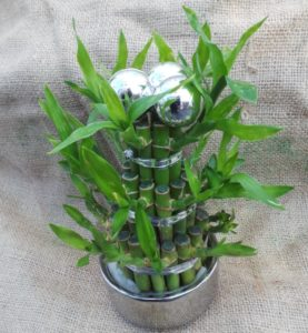 lucky bamboo house plants are a great Feng Shui tool as they are said to create positive energy. 10 favourite plants.