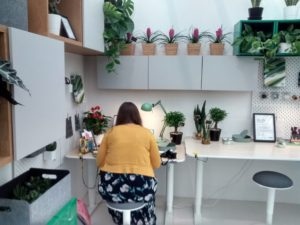 house and office plants arranged in a small office where they break up the space. Plants are good for you and can absorb toxins and static electricity.