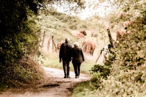 A senior couple taking a country walk surrounded by nature and a field of cows. Gardening is good for you.