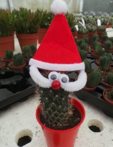 Cactus Santa, father christmas dressed as Santa, cactus plant, tiny cacti, plants as presents,