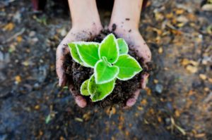 gardening without gloves allows you to get your hands dirty, dirty hands are good for your mental health.