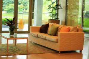 house plants in a living room with settee and rug, brightening up the space.