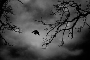 A wild bird flies against a cloudy sky with black branches in the foreground.