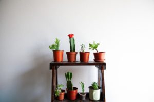 Cactus plants arranged in pots on a plant stand looking architecturally beautiful and effective