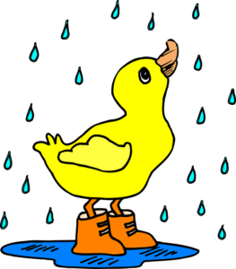 a yellow duck wearing wellies in puddle with rain falling