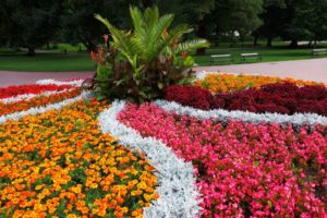 municipal planting of colourful bedding is a labour intensive way to garden