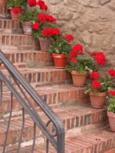 Red geraniums positioned on steps. Brick steps lined with colourful flowers in pots