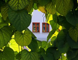 looking at a house through the leaves of a tree