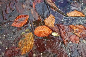 leaves in puddles