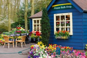 Blue shed with spring bulbs flowering