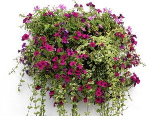 a great display of flowers in a hanging basket