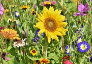 mix of perennial flowers in summer