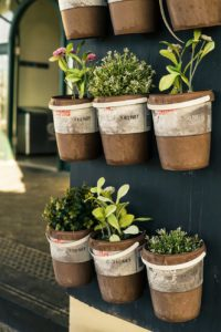 herbs growing in terracotta pots
