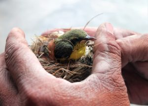 baby bird in a person's  hands