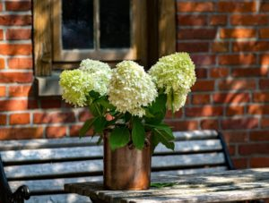 Hydrangea flowers in a copper pot