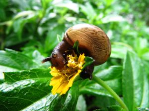 snail eating a plant and flower