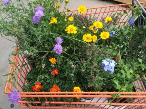 shopping, buying plants from garden centre