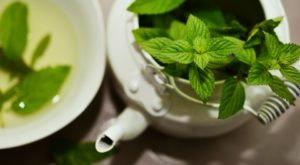 Mint plant growing in a teapot indoors as a house plant