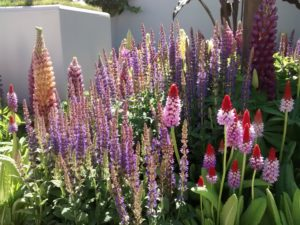 Naturalistic style of planting at Chelsea Flower Show